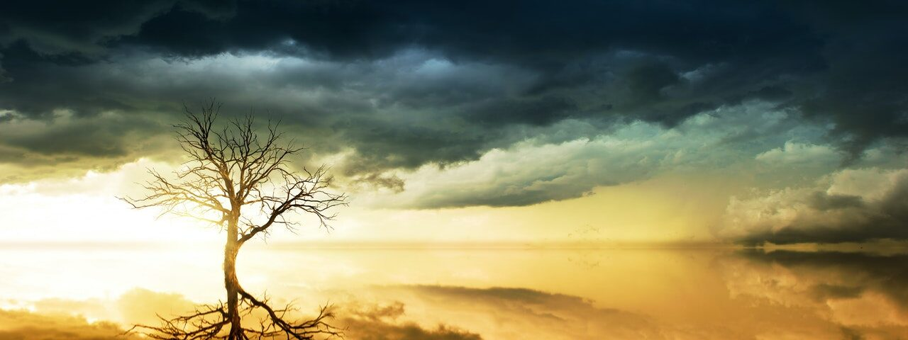 tree in the storm
