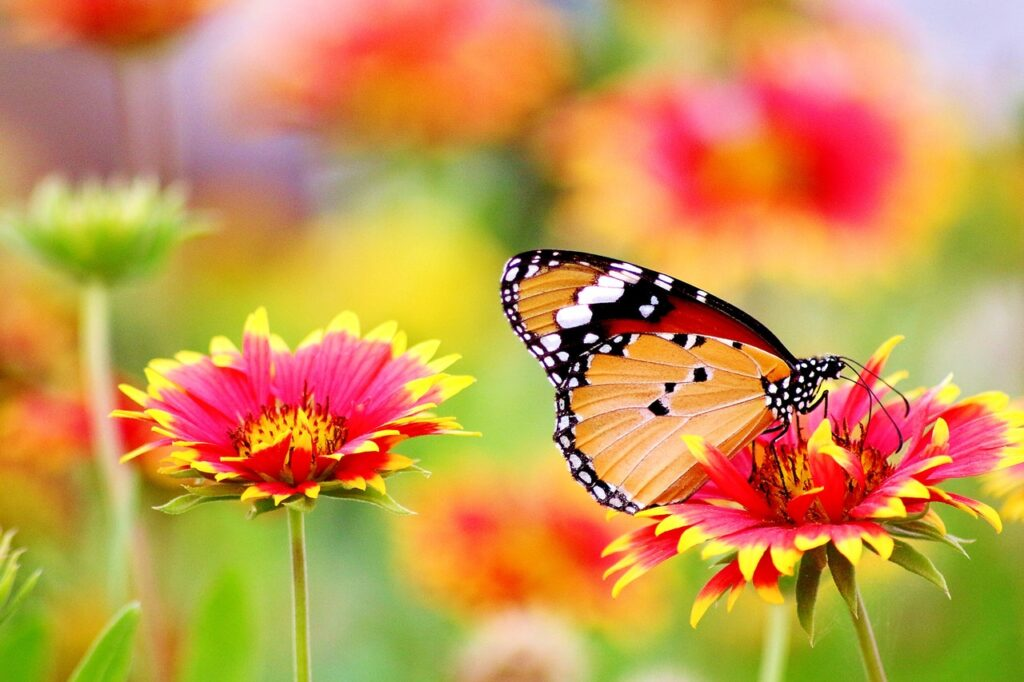 flower and butterfly_Photo by Pixabay